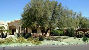 Fountain Hills Weed Ccontrol After