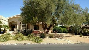 Fountain Hills Weed Control - Before